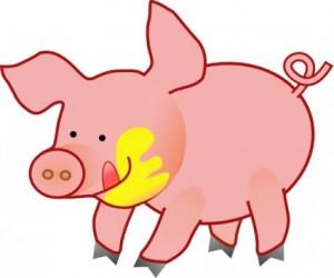 Animal pig